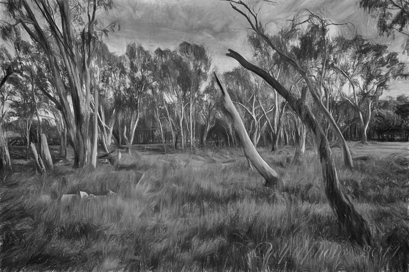 Ovens River Floodplain ~ pencil drawing rendition