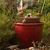 Fountain Robins
