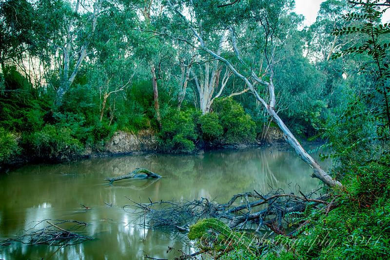 Muddy River