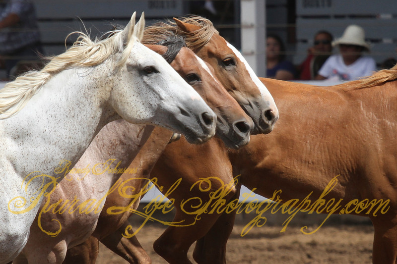 Wild Mustangs St Paul