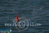 nun buoy-1