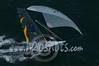 2014Int18'sMonAerials-472