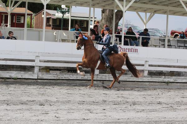 041 Saddle Seat Equitation 17 & Under