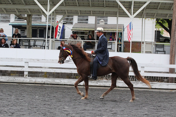 091 TWH Novice Horse Or Rider E-W Any Shoe 2 Gait Championship