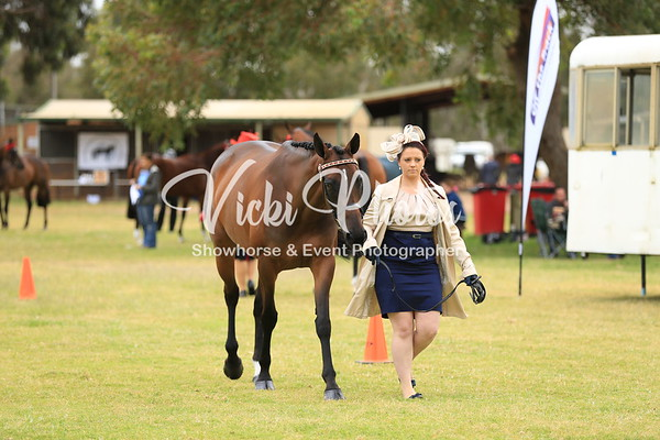2014 Thoroughbred Horse of the Year