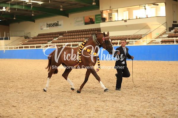 2014 WA Arabian Championships