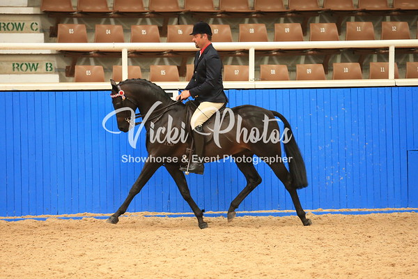 Acton Rockingham/Baldivis Arabian Showcase  -  3.5.2014