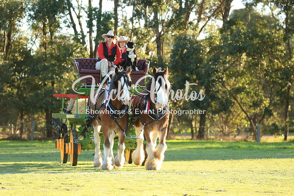 Dardanup Clydesdale & Heavy Horse Breed & Working Show.