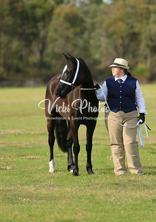 Pre Royal Breed Show presented by WAPA.
