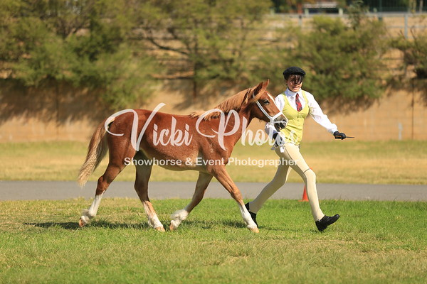 Progeny on Parade All Breeds Foal Show - 6.4.2014