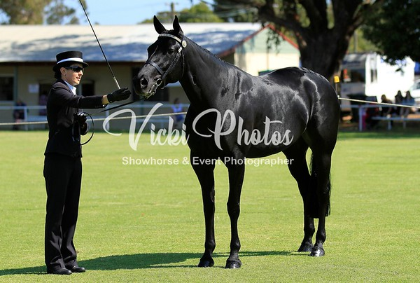Standardbred State Championships - 13.4.2014