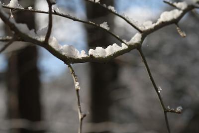 2014 Snow