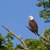 mosher-corry-2014-paddle-eagle-perch