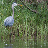 Sampson-Mark-2014-Paddle-Heron-On-Shore