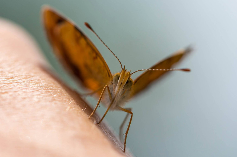 mosher-corry-2014-paddle-butterfly-macro