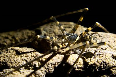 pavouk nalezený v hloubi jeskyně