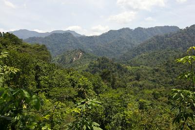 v popředí plantáže, vzdálenější hřebeny již náleží národnímu parku