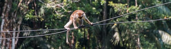 2014 Borneo - Sarawak - Bako