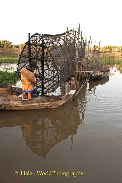 Harvesting Fish In Cambodia