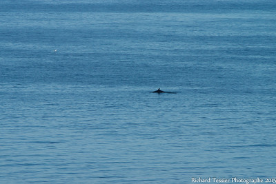 07252015_vacances_chalet-Anse-pleureuse-baleine_0192