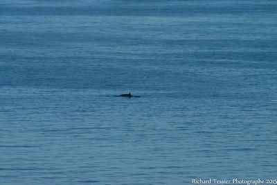 07252015_vacances_chalet-Anse-pleureuse-baleine_0191
