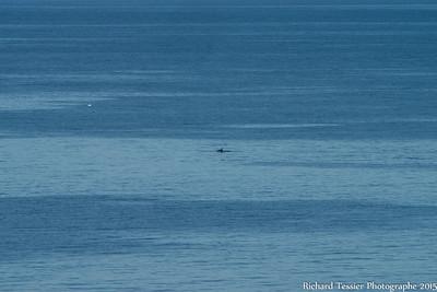 07252015_vacances_chalet-Anse-pleureuse-baleine_0194