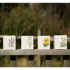 Seed Candle collection