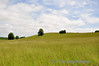 Killarney National Park. Knockreer. Sat 14.06.14