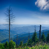 A wide view of the Great Smoky Mountains from the top of Clingman's Dome
