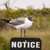 seagull standing on a notice sign