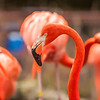 pink flamingo at a zoo in spring