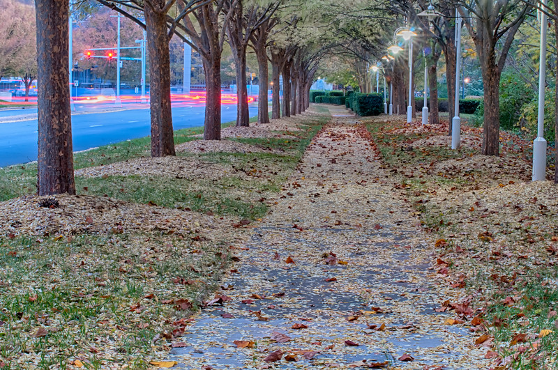 Autumnal alley in the park along the road