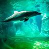 dolphin posing for a camera closeup