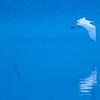 white egret flying over blue water