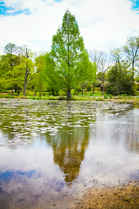 Reflective; Kenilworth Aquatic Gardens 2014
