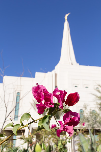 01-25-2014 Gilbert Temple Open House