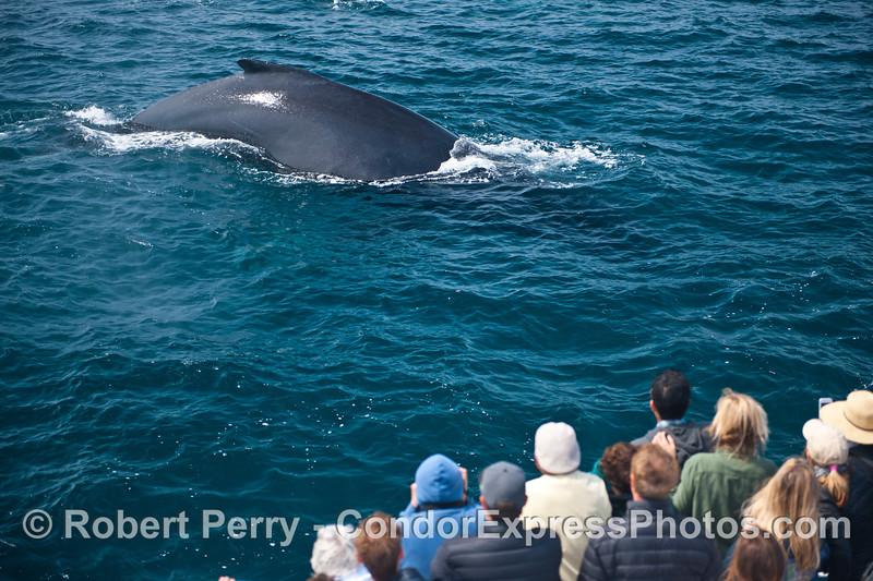 A VEEERRRRYYY friendly humpback whale.