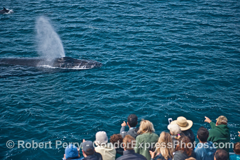 Passengers enjoy a nearby humpback whale spout....until they smelled it.