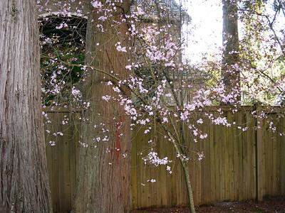 2014-04-04 Spring around Home