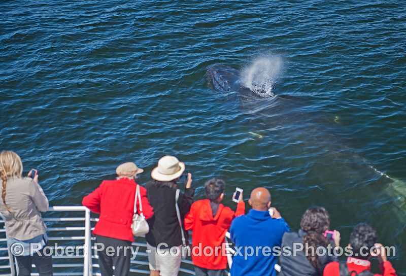 A humpback swam up alongside the Condor Express and surfaced within a few feet of the humans.