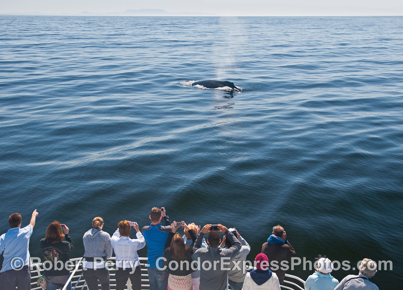 Mirror glass conditions and a very friendly humpback whale.