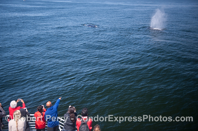 Two humpback whales come close to the pay a friendly visit.