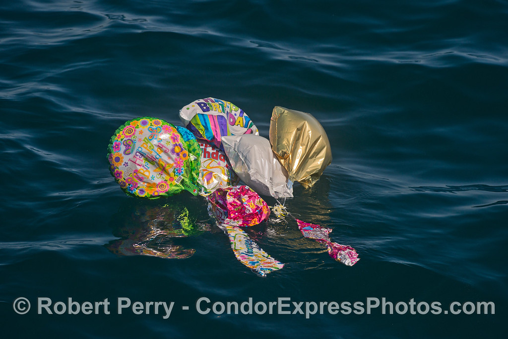 A cluster of mylar helium balloons that lost their helium and ended up polluting the ocean, as they always do.  Why can't we outlaw helium mylar balloons?