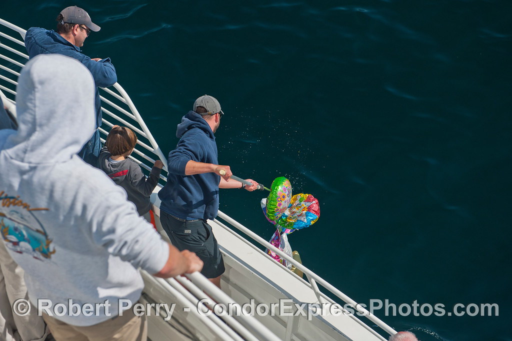 Deckhand Augie uses a small gaff to remove the polluting helium mylar balloons.