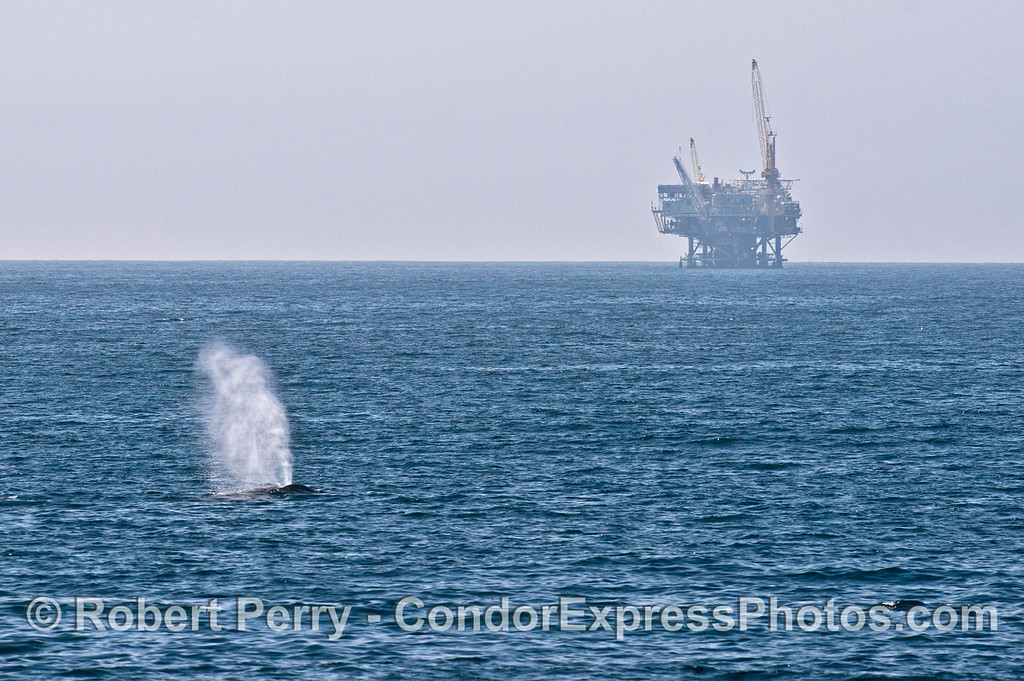 Offshore oil Platform Habitat and the tall spout from a humpback whale.