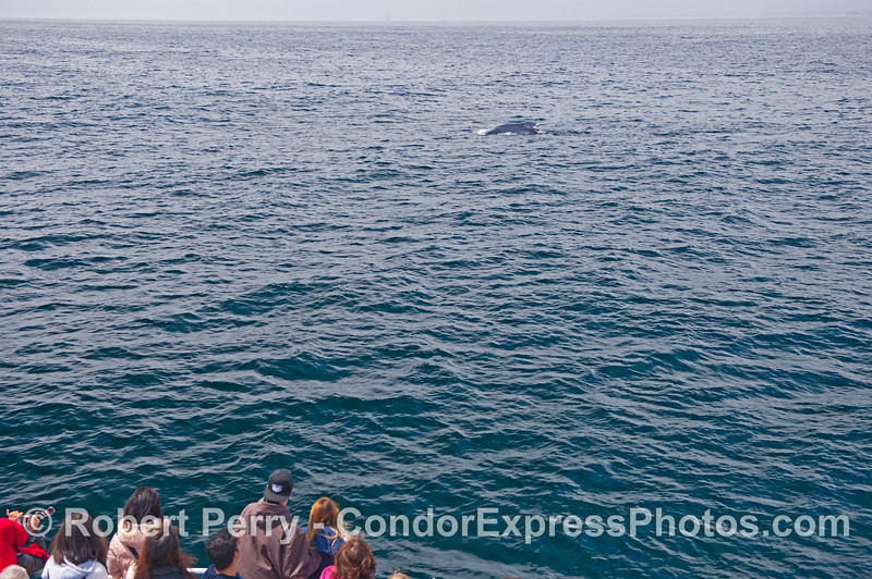 Humpback whale and humans.