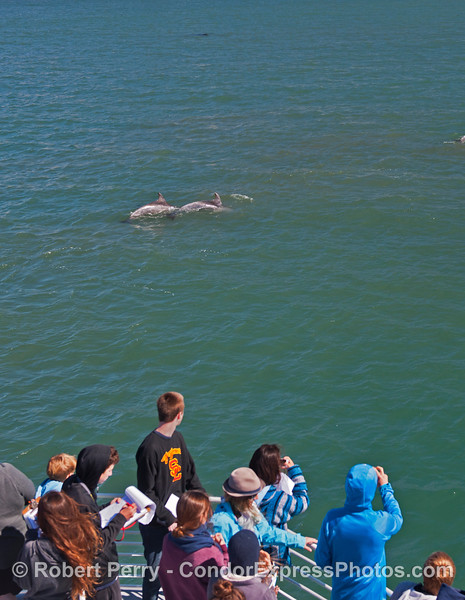 Students get good looks at some coastal bottlenose dolphins found in Goleta Bay.