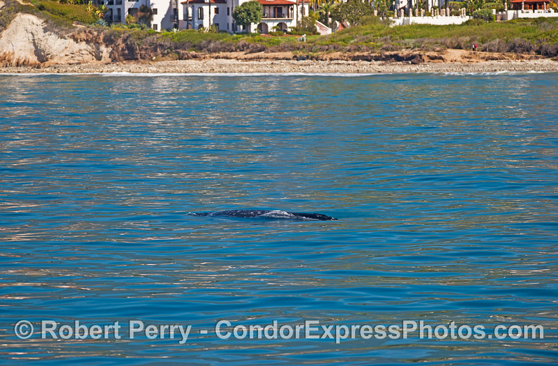 Let's sit on the patio and watch the gray whales swim north.
