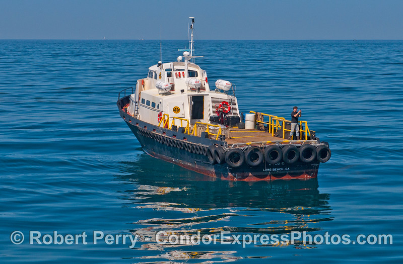"""Crewman on board the support vessel """"Doug C"""" snaps some gray whale pics with his phone"""