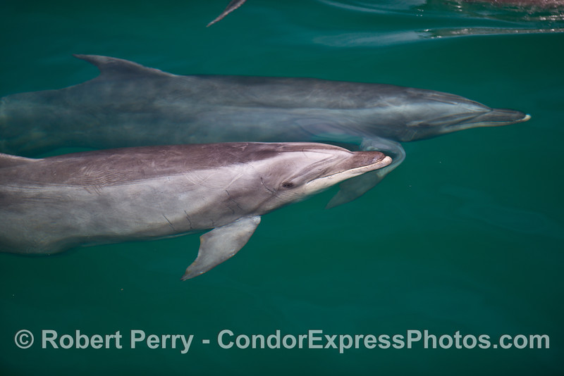 The ever watchful eyes of our bottlenose dolphins